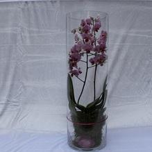 Blumen & Besonderes:Glas mit Orchidee H 60cm - ø 18,5cm