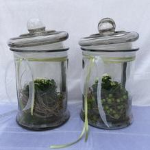 Blumen & Besonderes:Glas mit Minipflanze