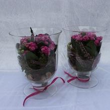 Blumen & Besonderes:Glas Pokal mit Minipflanze