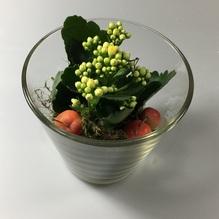 Blumen & Besonderes:Glas mit Calandiva