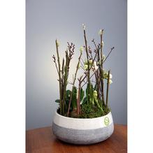 Fabriano Schale mit Frühlingsbepflanzung Ø 21 cm