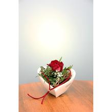 Camolia Schale Ø 17 cm mit Frischblumen Dekoration