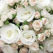 FASANA Serviette 217287 33x33cm 3lagig Dream of Roses 20 St./Pack.